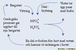 kolets kretslopp enkelt förklarat