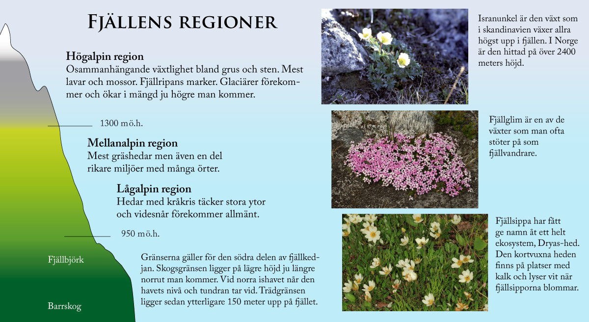 namn på växter i sverige